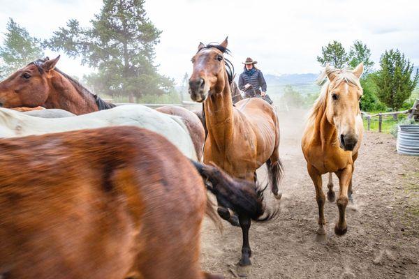 Horse drive thumbnail