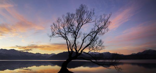 Sunset Tree thumbnail