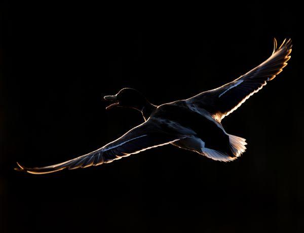 Play of light! In flight!! thumbnail