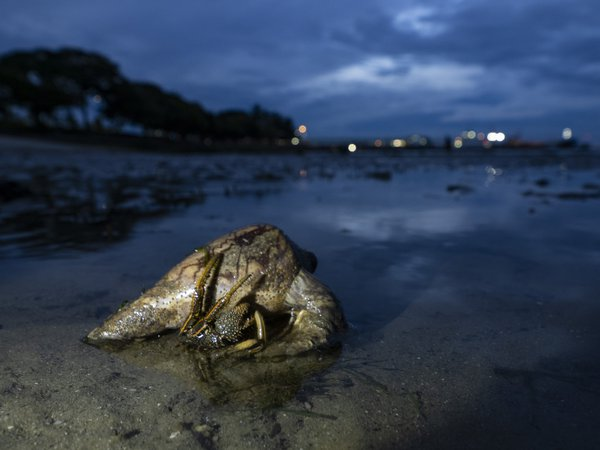A Hermit crab on the beach after sunset thumbnail