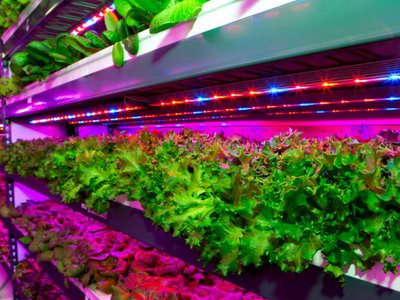 Emirates Flight Catering and Crop One Holdings announced plans this week for what would be the world's largest vertical farm, to be based in Dubai. This is another one of Crop One's vertical farms, which don't use pesticides and are more water-efficient than their soil counterparts.