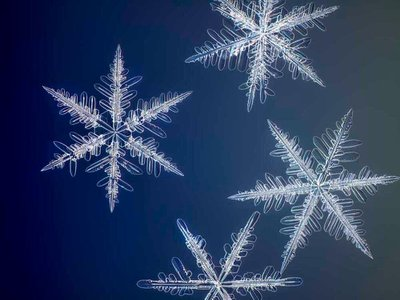 """""""Yellowknife Flurry,"""" a photograph by Nathan Myhrvold, captures the intricate structure of snowflakes."""