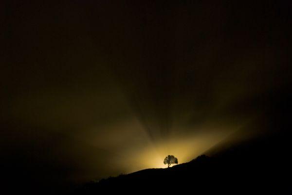 An illuminated tree thumbnail