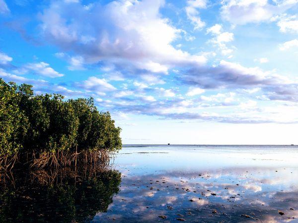 Mangrove Low Tide thumbnail