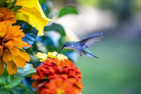 The garden's color thumbnail