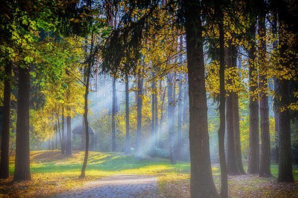autumn rays thumbnail