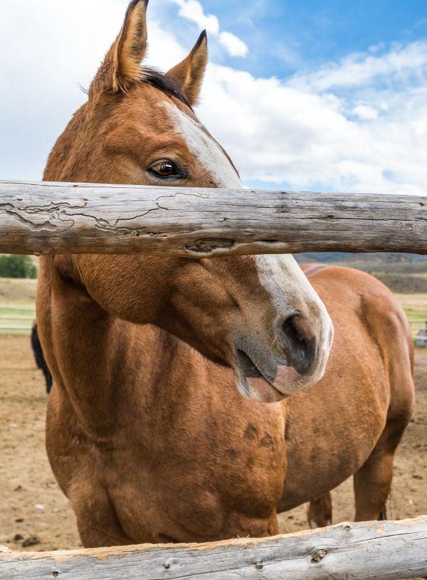 Horse thumbnail