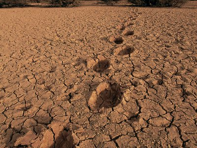 Footprints and dung are often the only evidence of their route.