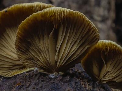 Time-lapse of fruiting mushrooms