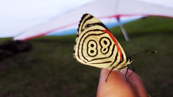 88 Butterfly thumbnail