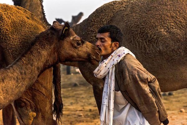 A moment from Pushkar Fair. Nikon D750, 24-120 Lens, f/5.6, ISO-640, s-1/4000s, f- 120mm thumbnail