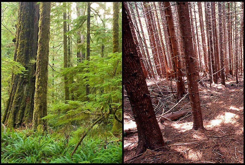 Composite comparing lush green forest with a bare, damaged forest
