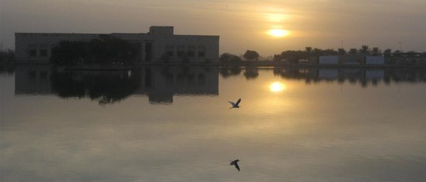 Crane flying over water in Baghdad, Iraq during sunset thumbnail
