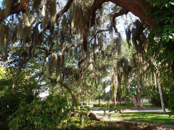 Mossy Trees thumbnail