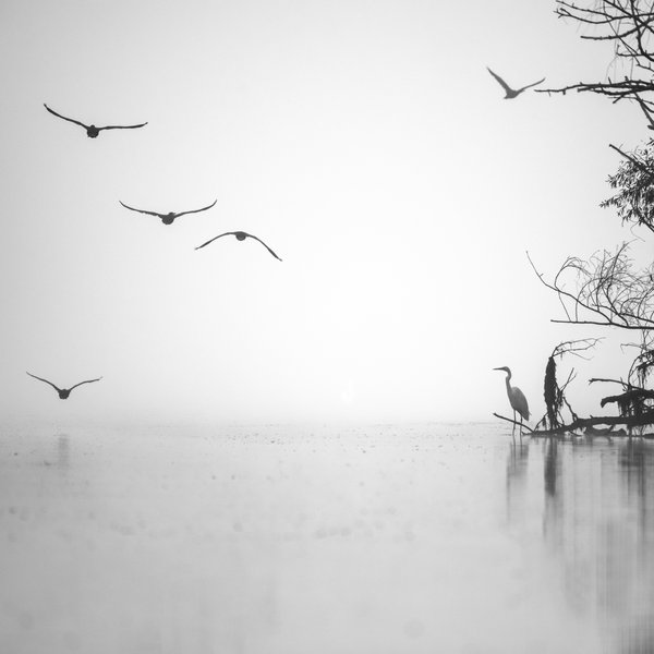 Foggy morning at Danube Delta thumbnail