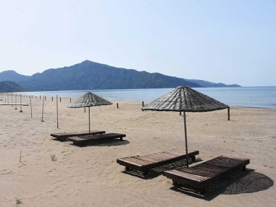 Iztuzu Beach in Turkey was closed during part of the pandemic. Around the world, lockdowns to combat Covid-19 forced people to stay home and halt activities—with mixed results for ecosystems and the living things within them.