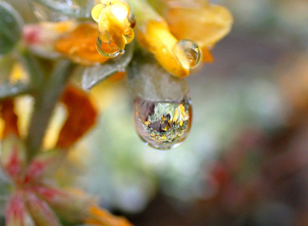 View through a Raindrop thumbnail