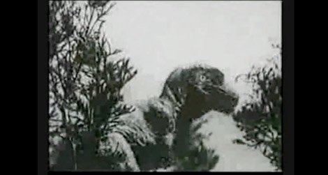 20110818094006slumber-mountain-movie-dinosaur.jpg
