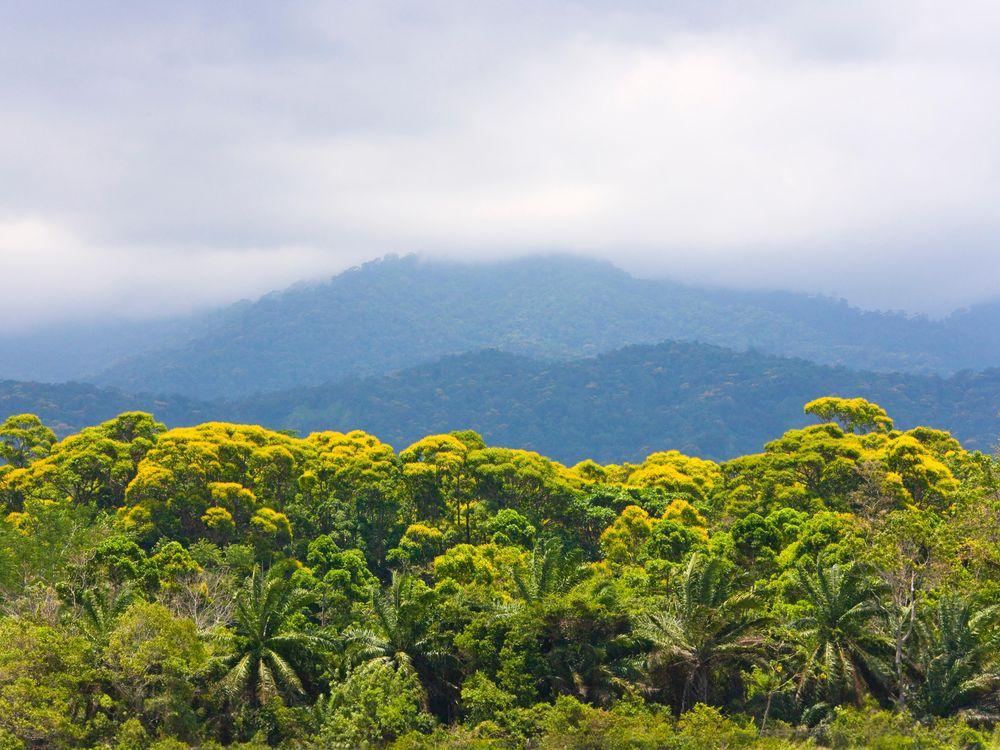 Rainforest in Honduras