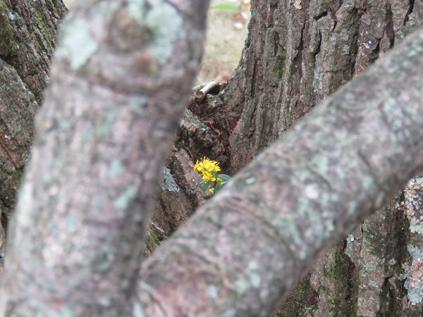 yellow flower thumbnail