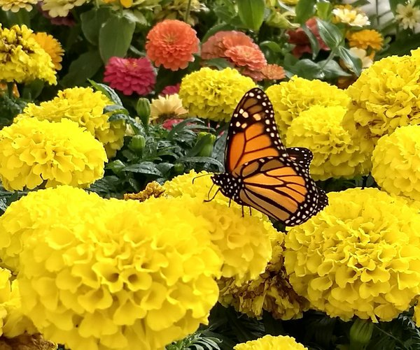 Butterfly in a flower garden thumbnail