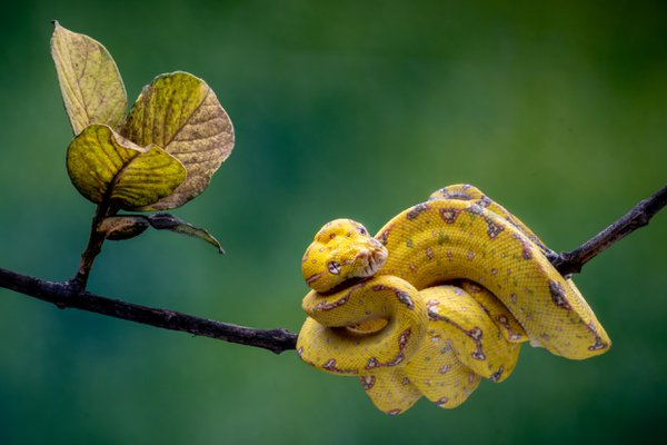 Tree Python  thumbnail