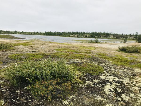Tundra thumbnail