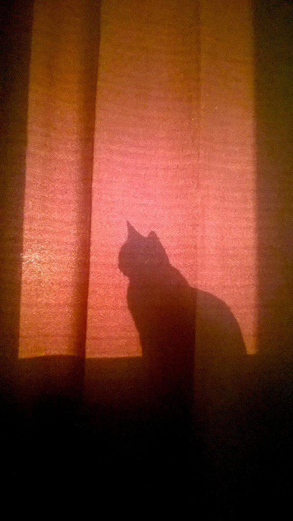 A shadow of a cat thumbnail