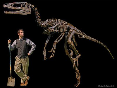 The Dakotaraptor fossil, next to a paleontologist for scale.