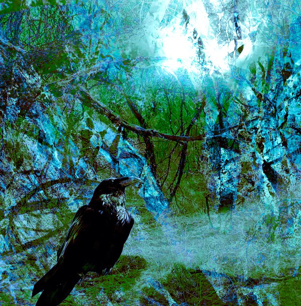 Desert Raven thumbnail