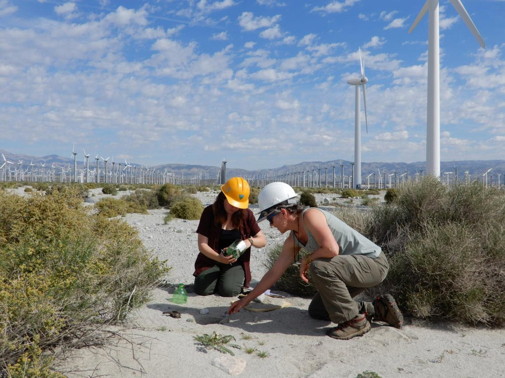 Two researchers wearing hard hats kneel next to a bird carcass found on a wind energy facility
