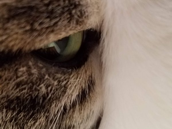 really close-up picture of cat thumbnail