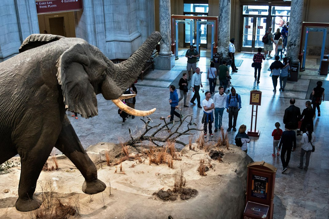 How to Virtually Explore the Smithsonian From Your Living Room