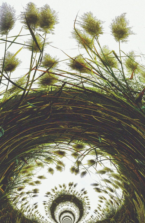 Pampas Grass in the Fall abstract view thumbnail
