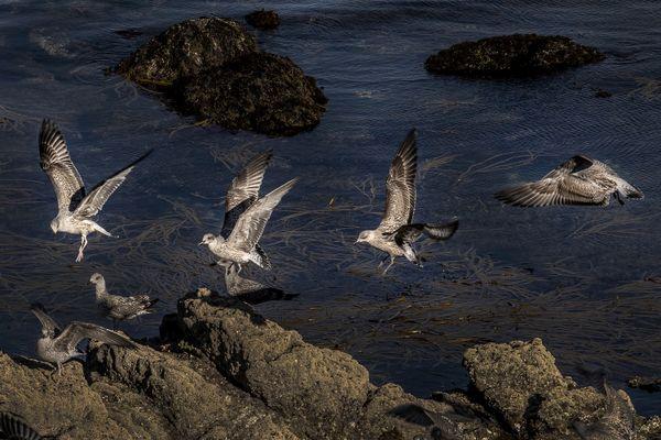 Seagull thumbnail