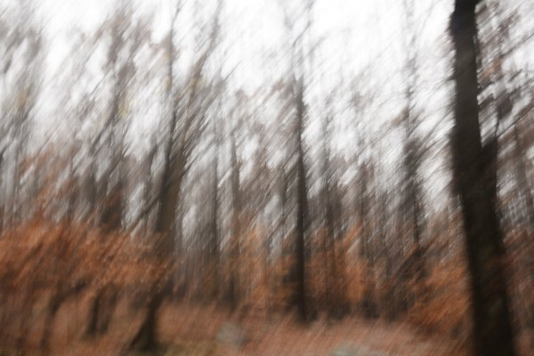 November Trees thumbnail