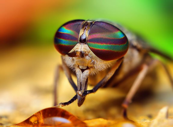 Locking Eyes With Spiders and Insects