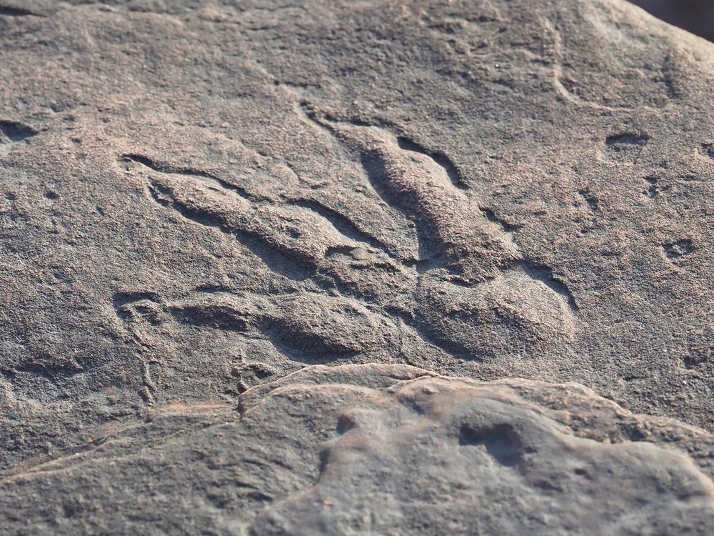A photograph shows the fossilized footprint in a rock