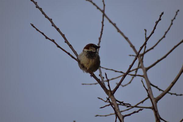 A Lonely Bird thumbnail