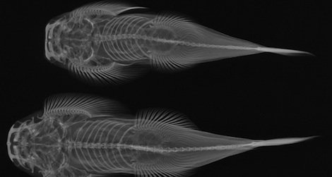 Beautiful and educational, X-ray images help us learn more about evolution.