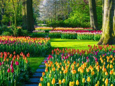 The Keukenhof Floral Park in Lisse, The Netherlands.