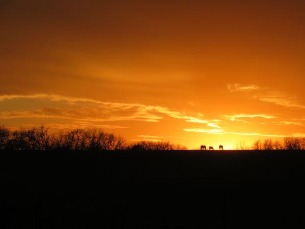 Kansas Sunset with Horses thumbnail