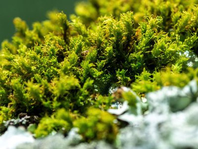 Bryophytes in the tropics are threatened due to lack of information and research.