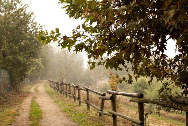 Walking in the Autumn thumbnail