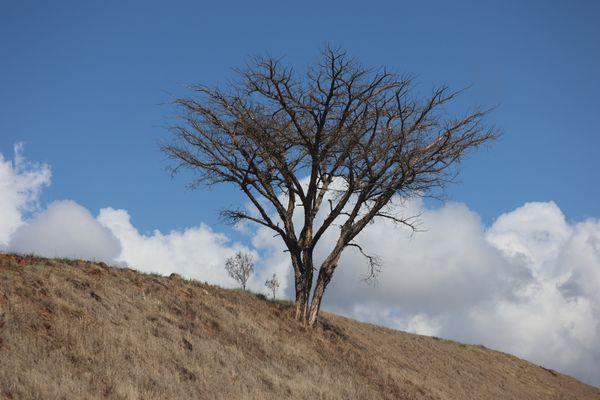 Acacia posing thumbnail