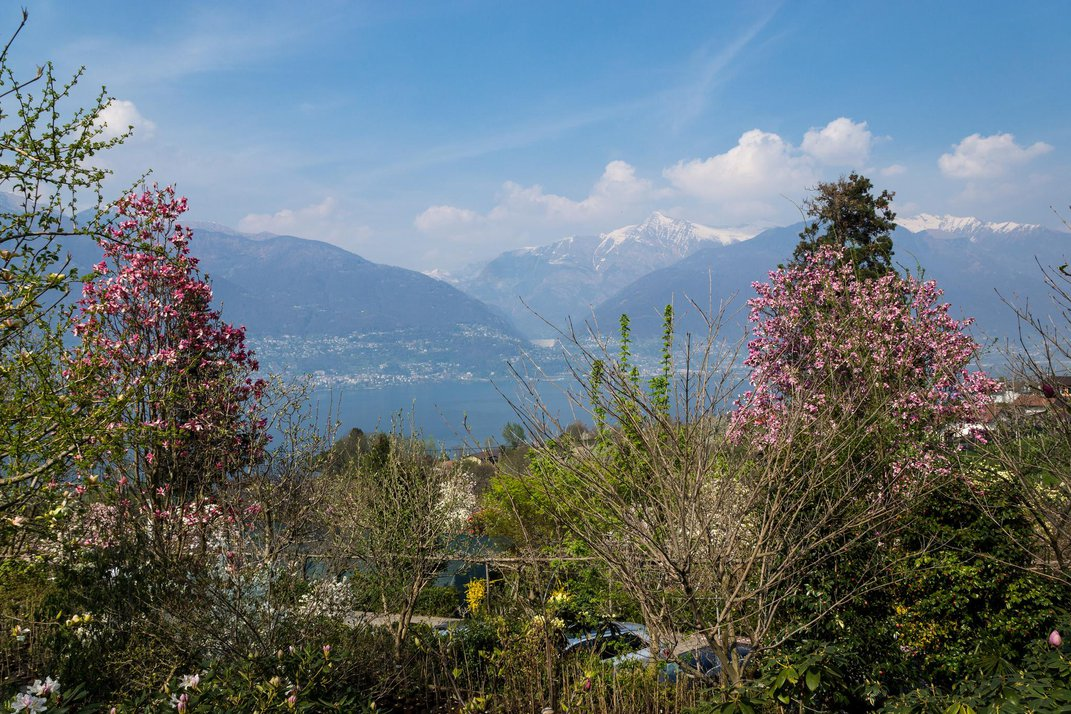 Switzerland's Most Beautiful Alpine Gardens
