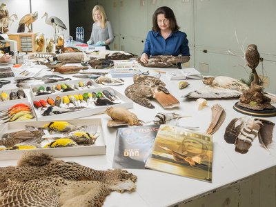 The Smithsonian's Division of Birds provided about 40% of the tissue samples for the new bird genomes in a landmark study. (James Di Loreto, Smithsonian)