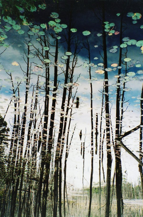Thru a Mirror Dimly, reflection of stand of dead trees in a lake.  Picture turned upside down on purpose. thumbnail