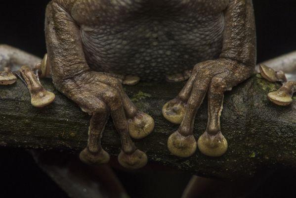 Frog Toes thumbnail