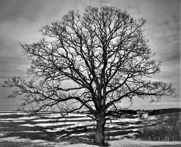 Tree of wisdom thumbnail